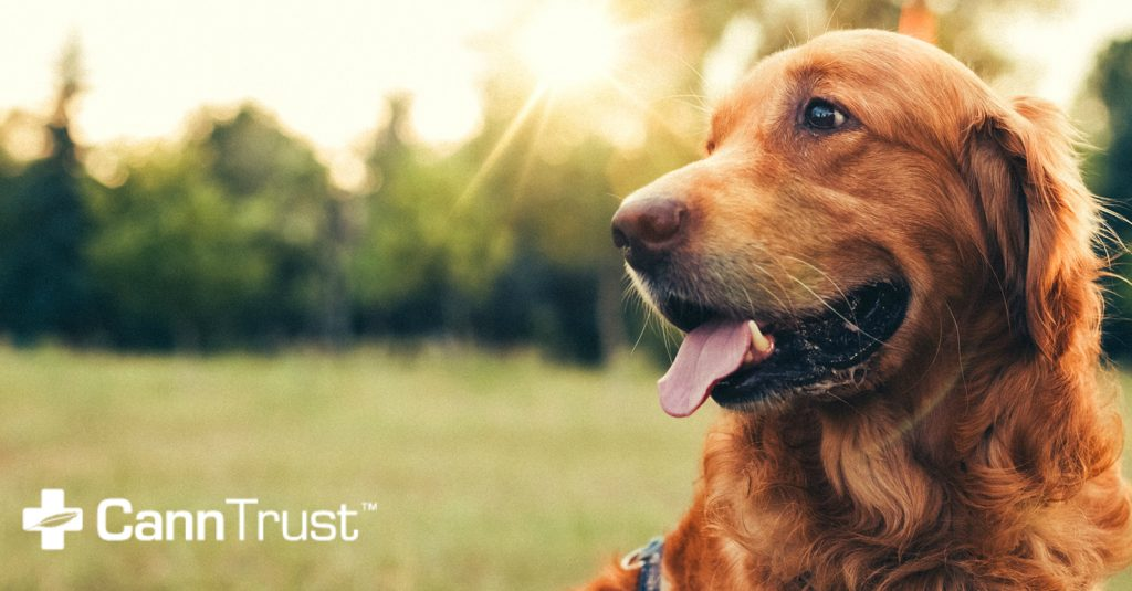 CannTrust® Enters Veterinary Cannabis Market Through Partnership with Grey Wolf Animal Health